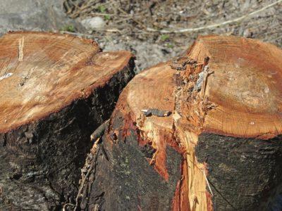 Baumschutz ist Klimaschutz: neue Anforderungen an die städtische Baumschutzsatzung @ Stadthaus, Kleiner Saal